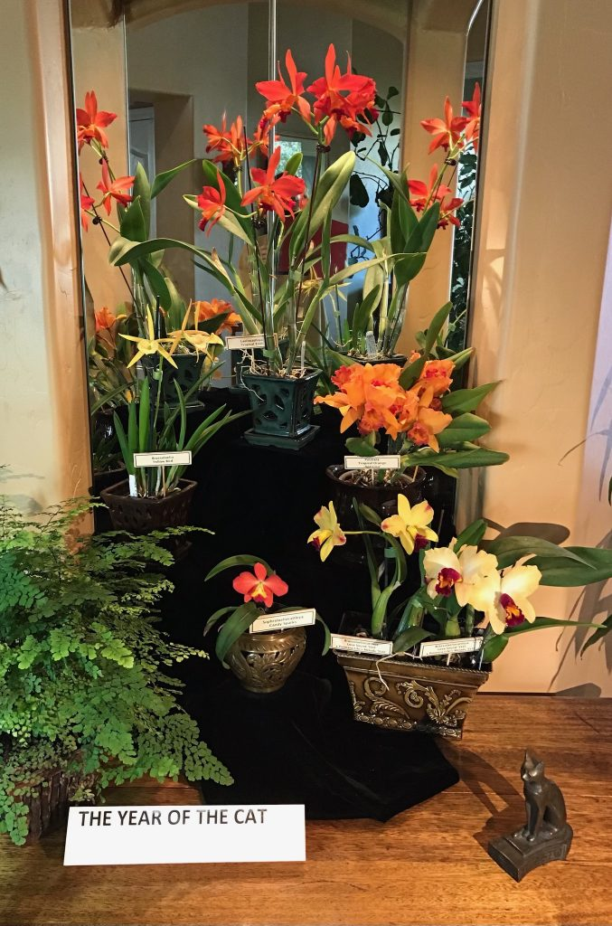Judy F., TOS, Feb 21, 2021. Entry 1. Assorted flowering orchids in a display called Year of the Cat and shows orchids displayed in front of a decorative mirror.