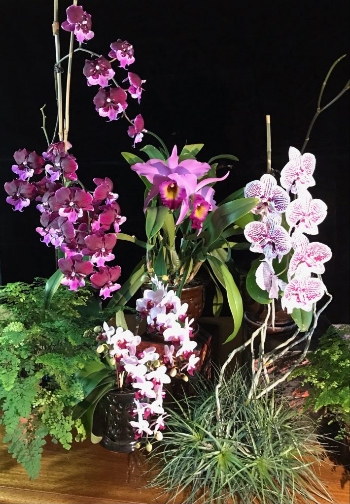 Judy F., TOS, Mar. 26, 2021. Entry 2. A Palatte of Pinks! Four pink orchids in a display.