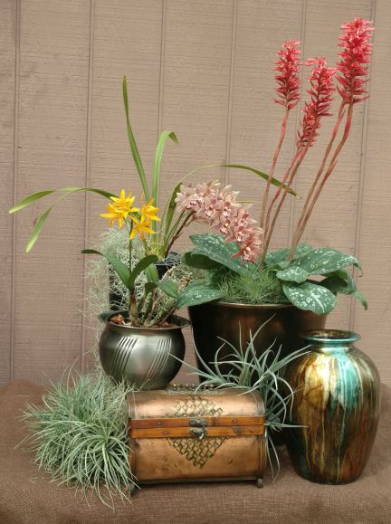 Sheri M., TOS, Mar. 8, 2021. Entry 2. Three flowering orchids on a table display.