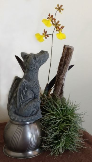 Sheri M., TOS, Mar. 25, 2021. Entry 3. Oncidium splendidum in bloom with dragon sculpture.