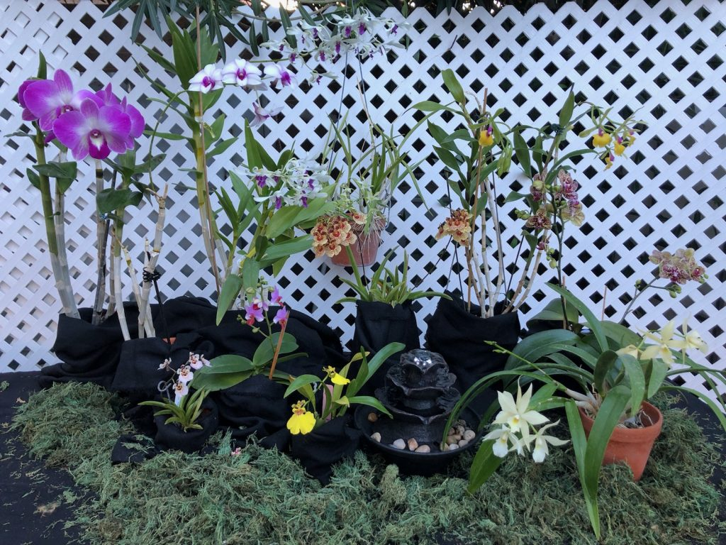 Karla V., TOS and DVOS, Mar. 8, 2021. Entry 1. Flowering orchids in a display.