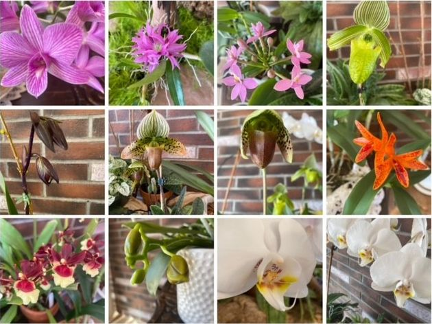 Gallery of orchid flower close ups by Kaye E. March 2021